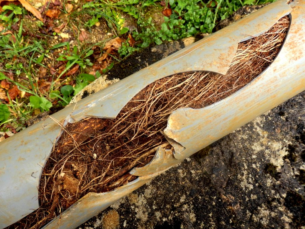 Protect Your Plumbing from Tree Roots